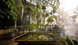 Visita para familias al Jardín Botánico @ jardín botánico | Madrid | Comunidad de Madrid | España